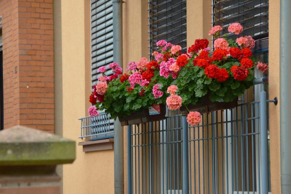 balcony-plants-1159382_1280